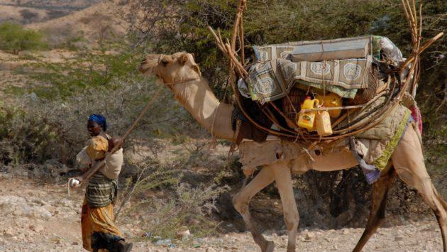 Ilmastonmuutoksen pahentama kuivuus kurittaa Solidaarisuuden toiminta-aluetta Somalimaassa.