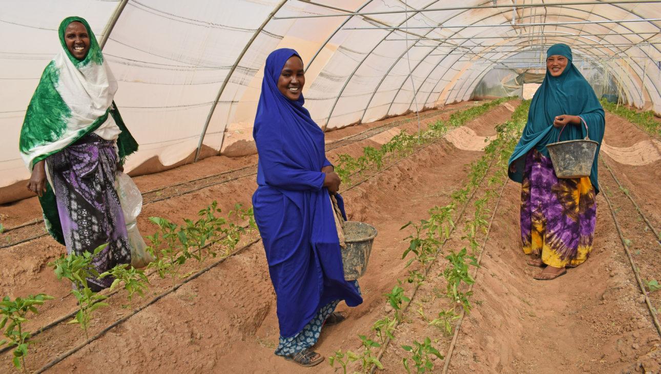 Naiset pystyivät hankkimaan maanhallintaoikeuden maille, joilla heidän osuuskuntansa kasvihuoneet sijaitsevat. Kuva: Siru Aura