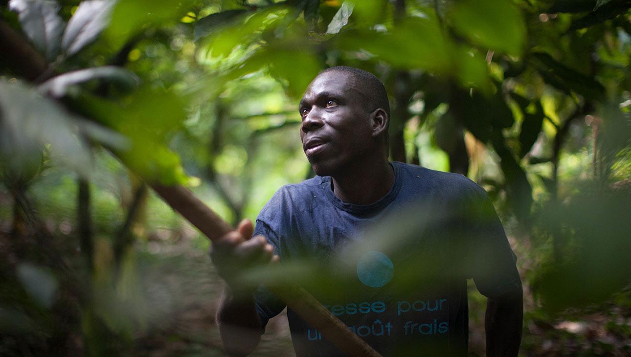 Reilun kaupan kaakao-osuuskunta Agbovillessä, Norsunluurannikolla on käyttänyt Reilun kaupan lisiä esimerkiksi koulujen rakentamiseen ja lasten oikeuksien edistämiseen. Kuva: Sean Hawkey