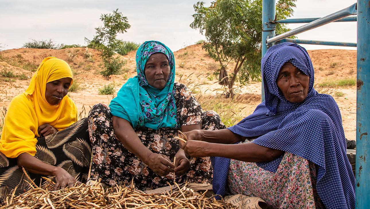 Naisia Somalimaassa tekemässä yhdessä töitä.